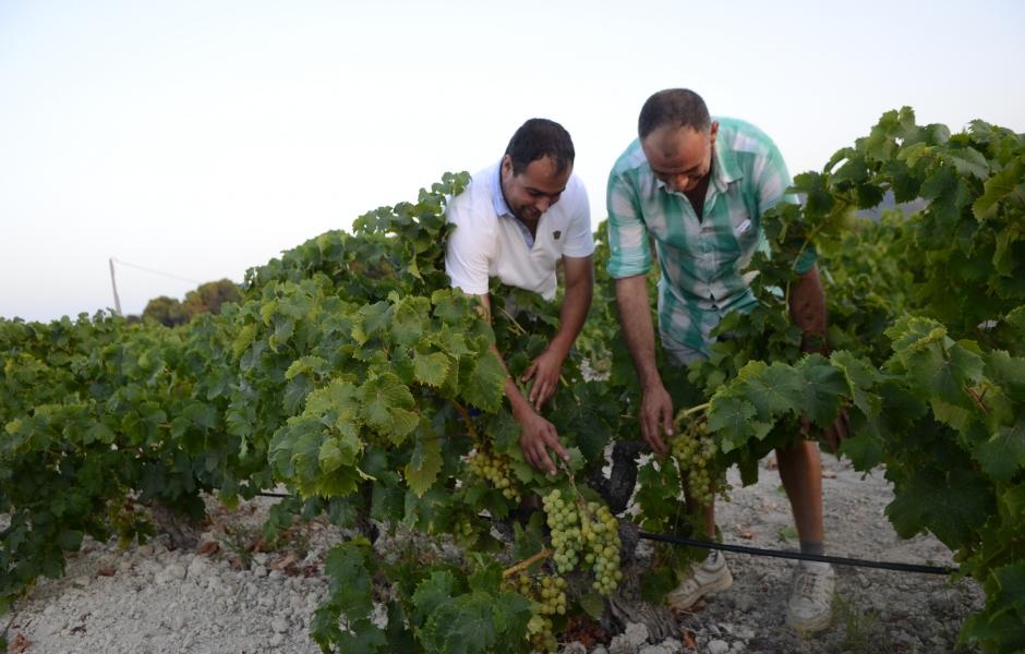 Uvas cabrera