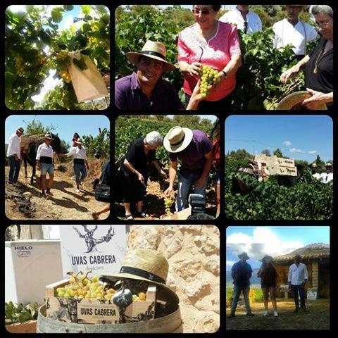 uvas-cabrera_wineandtwits_benissa_costa_blanca_moscatel-de-alejandria